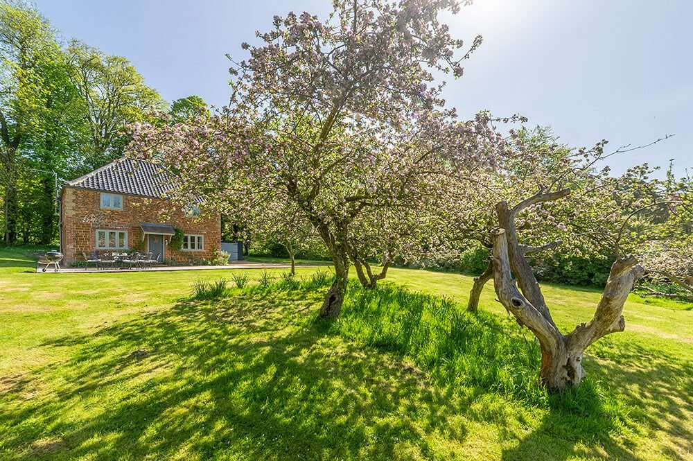 Apple trees in blossom in the garden of Park Cottage holiday cottage in Norfolk