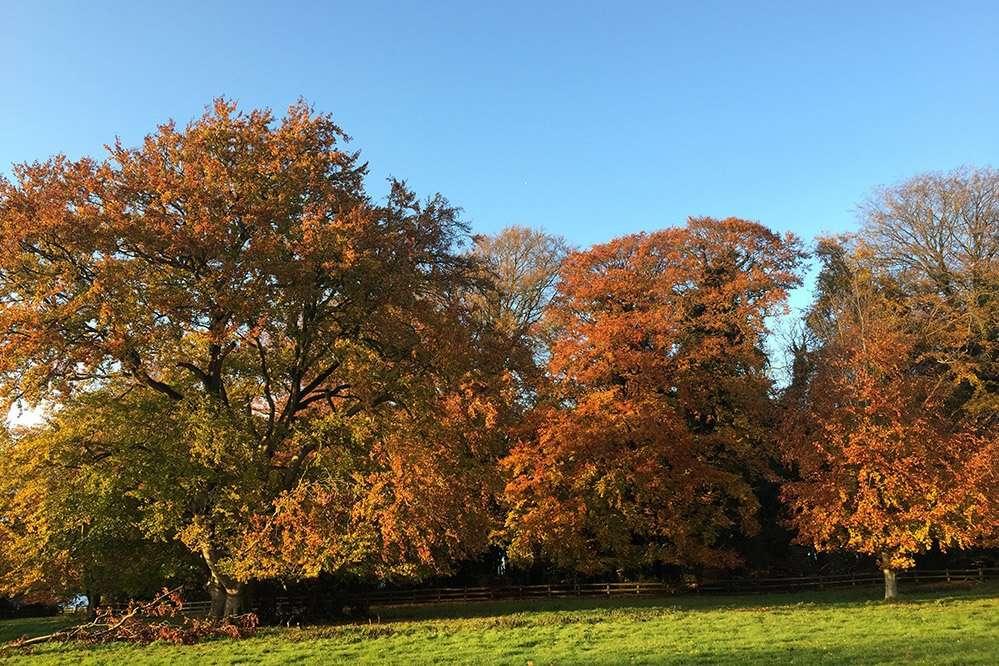 Autumnal Fring