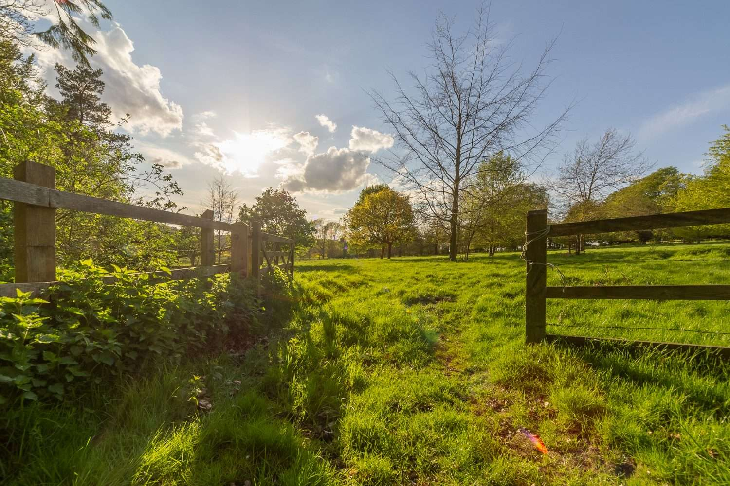 Views of the Norfolk countryside on the Fring Estate