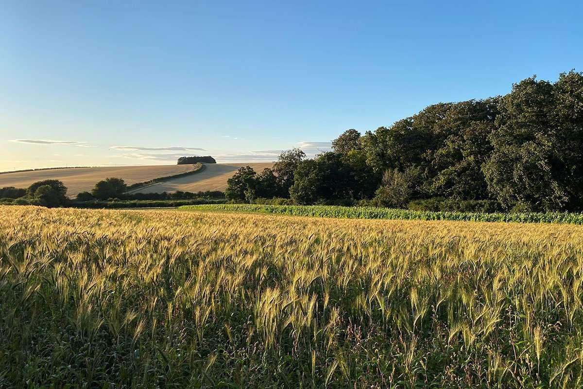 Fields around Fring