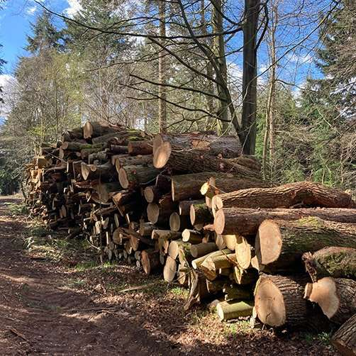 Fring Wood